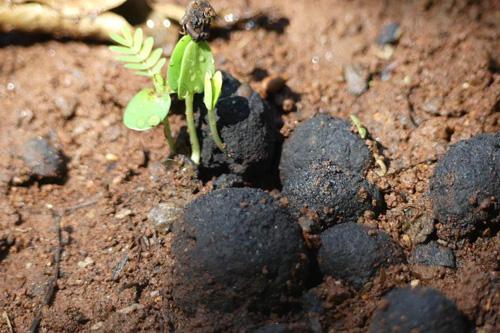 Planter des arbres